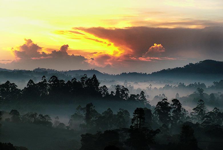 Sri Lanka | Puesta de sol tras de bosque nublado