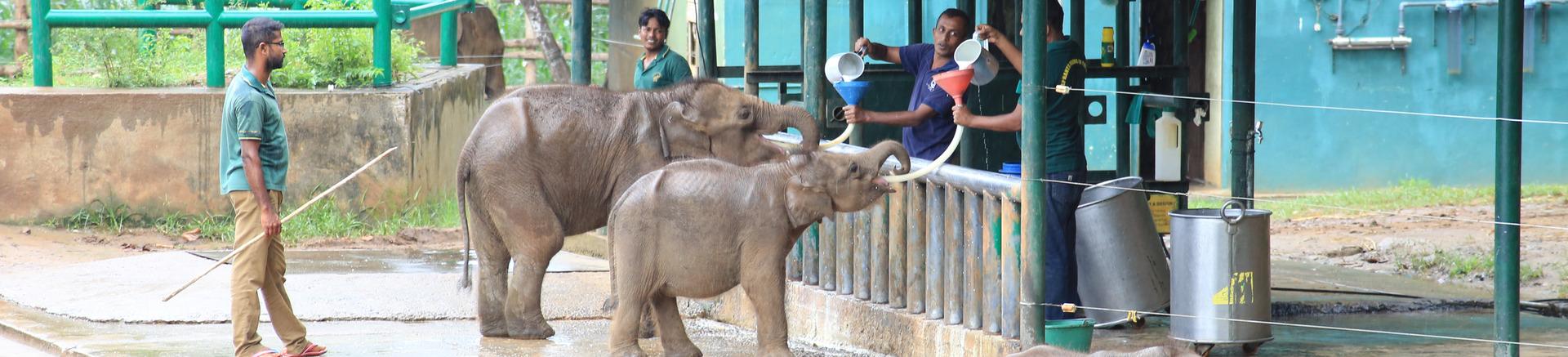 Punto de tránsito de elefantes