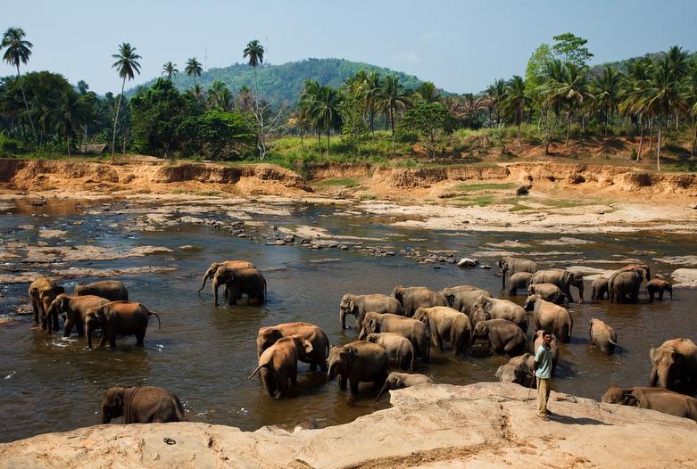 Sri Lanka | Orfanato de elefantes