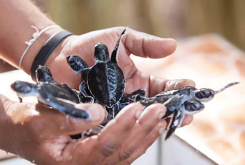 Sri Lanka | Estación de tortugas, Kosgoda