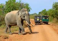 Viajes a Sri Lanka   Yala National Park