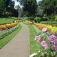 Sri Lanka | Jardín Botánico, Kandy