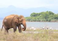 orfanato de elefantes en Udawalawe