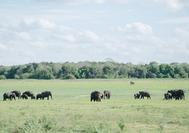 elefante en willpattu